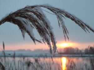 Sneeuw Haiku Winter Zon 2015