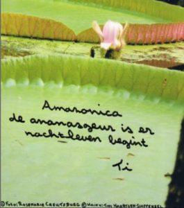 haiga haiku Amazonica tini haartsen-slappendel